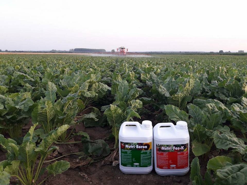 Nutri Fos-K u sećernoj repi