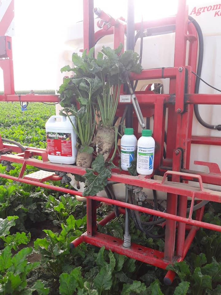 Proverena zaštita šećerne repe od cerkospora